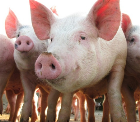 2018年05月20日全国外三元生猪价格行情涨跌表