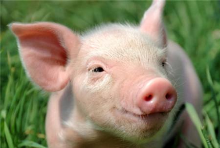 2018年05月20日(10至14公斤)仔猪价格行情走势