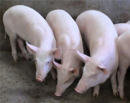 2018年05月20日(15至19公斤)仔猪价格行情走势