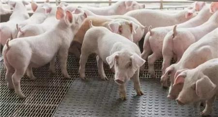 2018年05月21日(10至14公斤)仔猪价格行情走势