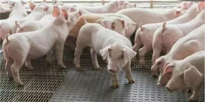 猪市:全国猪源市场减少,南北方猪价全线上涨!终于等到好消息!