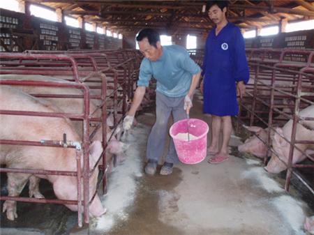 养猪人进场忠告:投入不起,将进不了养殖业!