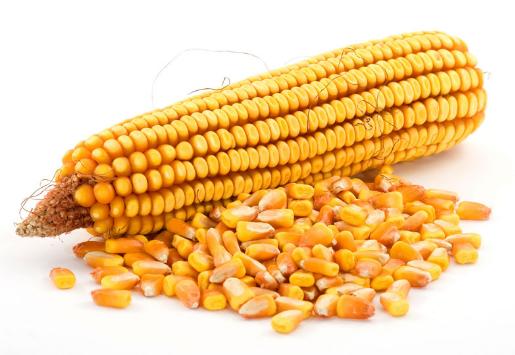 2018年05月21日全国玉米价格行情走势汇总