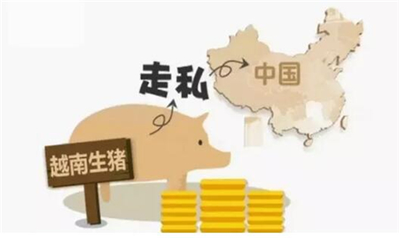 温氏罗旭芳:猪价明年还将有一波深跌 建议禁止猪杂碎进口