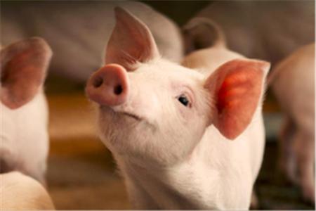 2018年05月23日(10至14公斤)仔猪价格行情走势