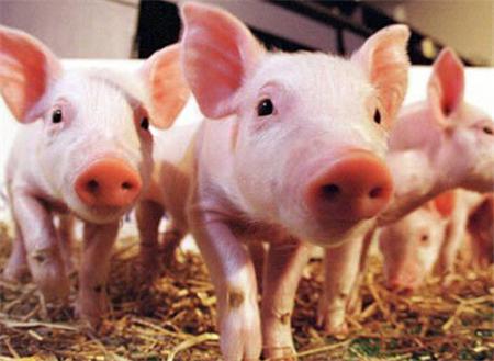 2018年05月23日(20至30公斤)仔猪价格行情走势