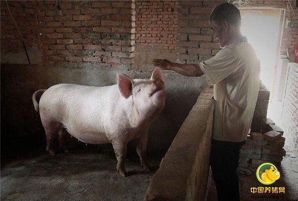 农村60岁老人一条腿行走养猪养牛致富,军人钢铁意志让他坚强