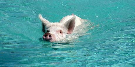 供需格局未改!猪价上涨能否久远?