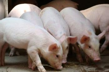 大学生夫妻返乡创业养猪年收入超三百万,畜禽粪便资源化利用是关键