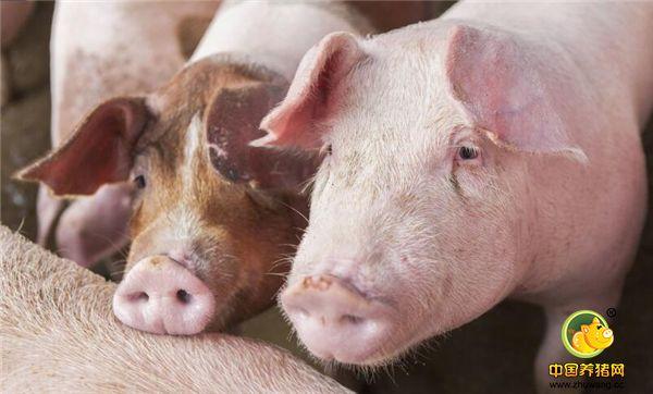 专家忠告:2018年我国母猪存栏量过生,养猪无风口,请慎重入行