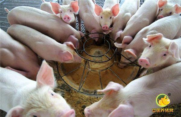 2018年生猪价格从年初的每斤7.5元一路下滑,目前生猪的出栏价格已经跌破五元,是近八年来的最低点。山东日照部分地区的猪肉价格已经到了7元每斤,中小型养猪户已经纷纷出手仔猪,不再育肥,更不可能再次把养殖规模扩大,部分中型养殖场已经大量消减肥猪养殖。