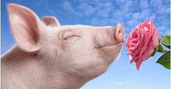 """一天涨4毛,猪价进入""""暴走""""模式,有价无市还是动真格暴涨?"""