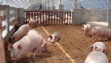 """涨涨涨,向""""12元""""进军,6月猪价这么走?"""