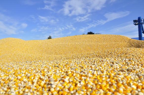 开放,迎接更好的未来?玉米和豆粕什么情况……