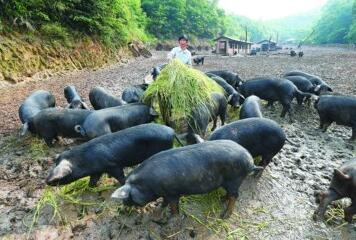 今年7月1日起,这些农民合作社将被吊销营业执照!