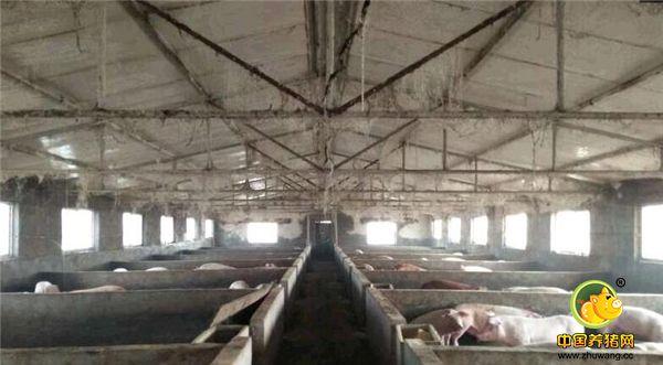 晒晒自家猪场污染防治配套设施,其实做好环保也很简单!