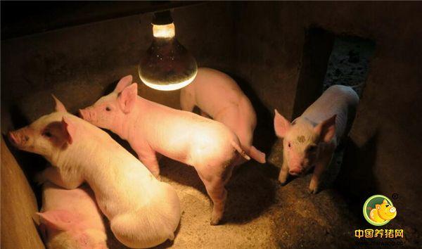 养猪人:猪场利润就是这么白白流走的,该怎么做才能减少损失呢?