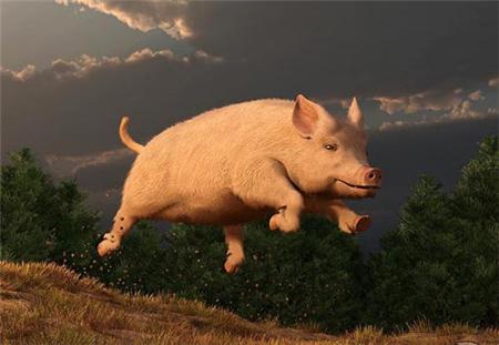 猪价筑底已完成,阶段性反弹期真要来了?
