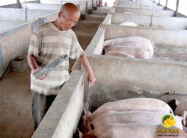 农村大爷治猪病的土方,高效省钱,比兽医还管用