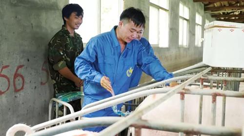 不用自养公猪,高端商品猪精将是2018年规模猪场首选