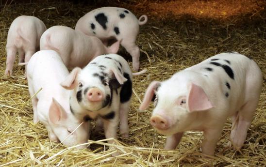 """自古猪粮安天下,何时养猪竟成了一个奢侈活儿?""""以后不养猪了,我也不关注你了""""一早猪场动力网收到一条""""特别""""的留言,这位猪友到底怎么了?"""