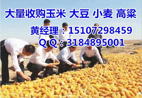 8月份玉米价格将上涨|吉林玉米收购价格