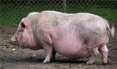 分析过去10年猪价,这个权威机构总结以下几点规律!