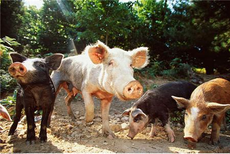 2018年06月18日全国内三元生猪价格行情涨跌表