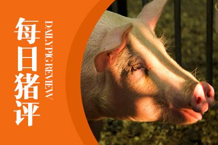 06月19日猪评:能繁母猪存栏下降,近期猪价将小幅震荡上行!