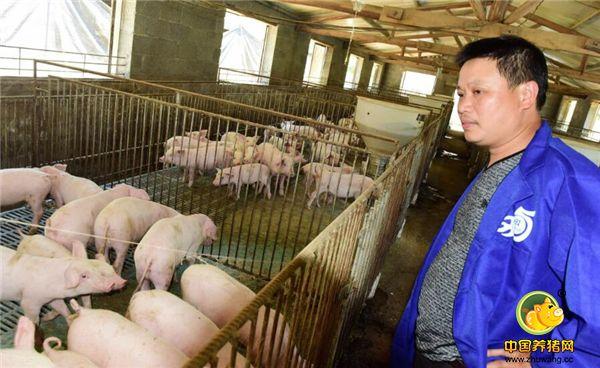 勤劳赚钱,农民养猪养出门道,一年销售额130万!