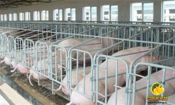 啥样的设备才能帮你养猪赚大钱?