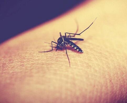 如何分辨猪场灭蚊棒香的优劣?5招教你一眼搞定!