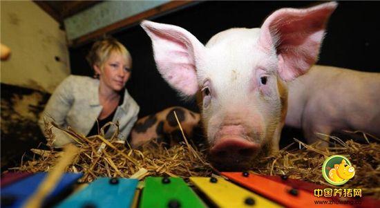 科学证明:原来猪猪也有喜怒哀乐...