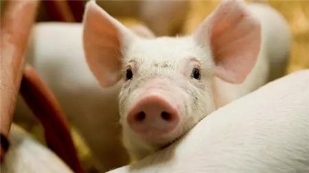 2018年06月22日(10至14公斤)仔猪价格行情走势
