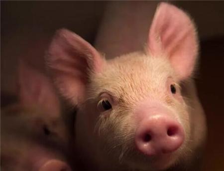 2018年06月22日(15至19公斤)仔猪价格行情走势