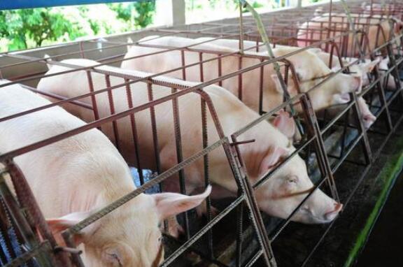 饲料原料涨价,猪价下跌,养殖户的苦日子真的来了?