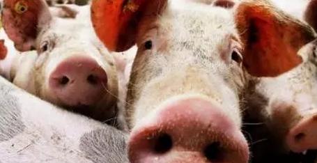 2018年06月24日全国土杂猪生猪价格行情涨跌表