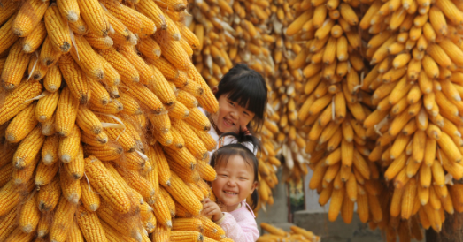 2018年06月24日全国玉米价格行情走势汇总