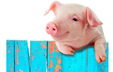 猪价会迎来新一轮涨价么?不出十天就要涨到6块……