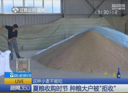 """十几万斤""""呕吐毒素""""超标小麦或用作饲料!专家:最好别喂猪"""