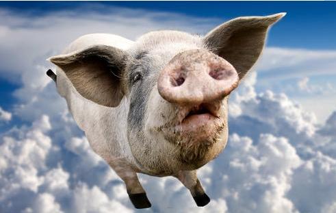生猪需求量短时短缺 后期或将刺激微幅走高