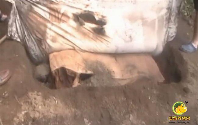 把这头200斤的小猪在坑里埋上8个小时之后,就可以把它给挖出来了,挖出来之后,揭掉盖在上面的一层布,那个香气扑鼻啊!味道闻着就饿了!