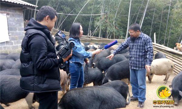 牧猪人何勇接受记者专访。