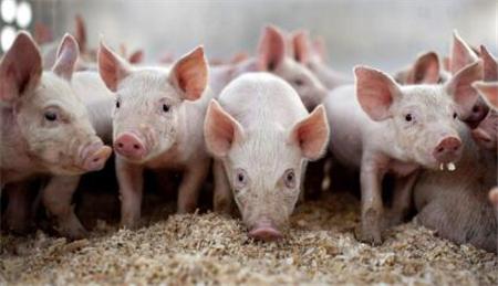 2018年06月28日(15至19公斤)仔猪价格行情走势