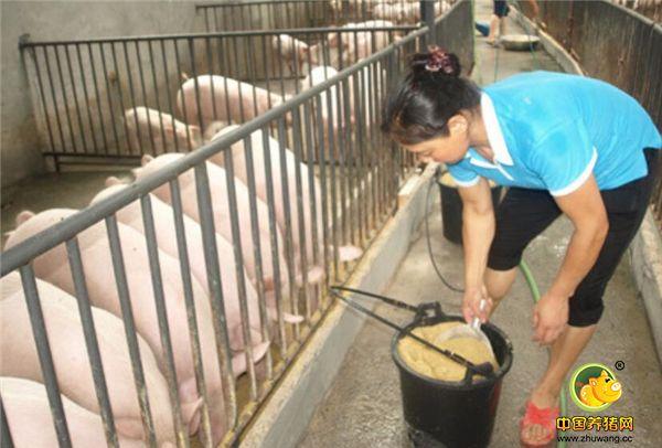 都说养猪赚钱,真的能养好的有几个?其中也有着不为人知的辛苦