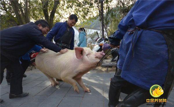 杀一头猪办上两三桌,养猪不赚钱,农村曾经的那些生活很美好!