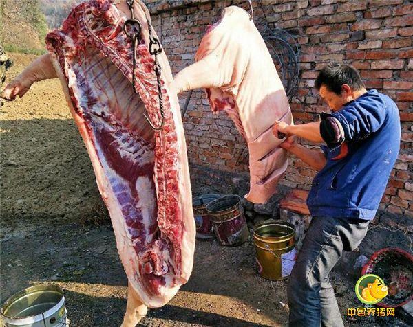 有时我们也会看,因为我们当地一般是凌晨二三点才杀猪,一是为了第二天早上天一亮杀猪的就能拉到各村去卖。