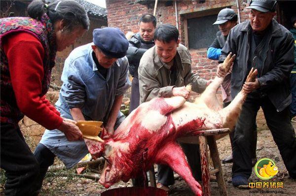 当然,以前是没有定点屠宰,所以杀猪的人一般都是家里的大人早早和他们约好,他们前来看过猪,并定好价钱。