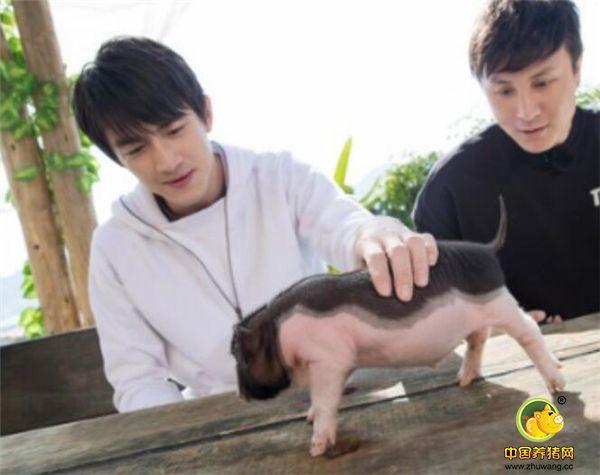 最近,林更新在参加江苏卫视《三个院子》录制时,和朱桢一起在小院里养了两只可爱的小香猪。