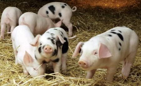 屠宰量最低谷的时候来了!7月猪价这么走!